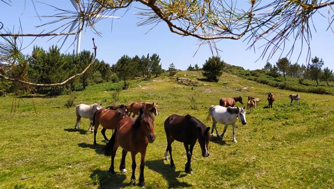 Cabalos-CMV-Baronha-