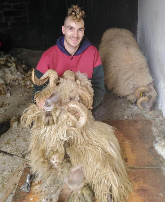 Kevin-rapador-ovellas-