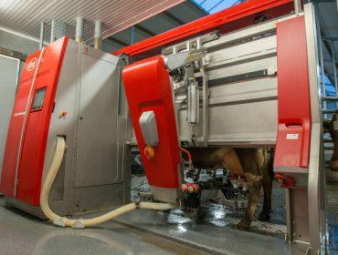 Fiabilidade e capacidade, os puntos fortes do robot de muxido Lely Astronaut A5