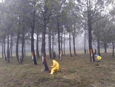Baroña, a comunidade de montes que implica ós seus veciños