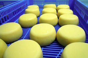 Só media ducia de queixarías elaboran queixo curado Arzúa-Ulloa. O de Terra de Melide está nunha cámara aparte.