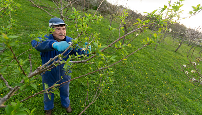 San Sadurniño recupera os cursos de fruticultura e apicultura suspendidos pola crise sanitaria
