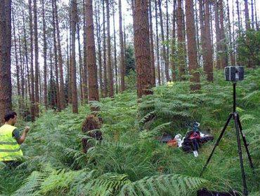 Xornada online sobre a xestión forestal orientada á obtención de piñeiros de calidade
