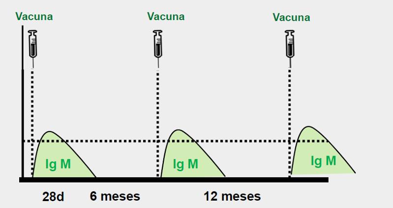 vacina efa fonteboa msd 5