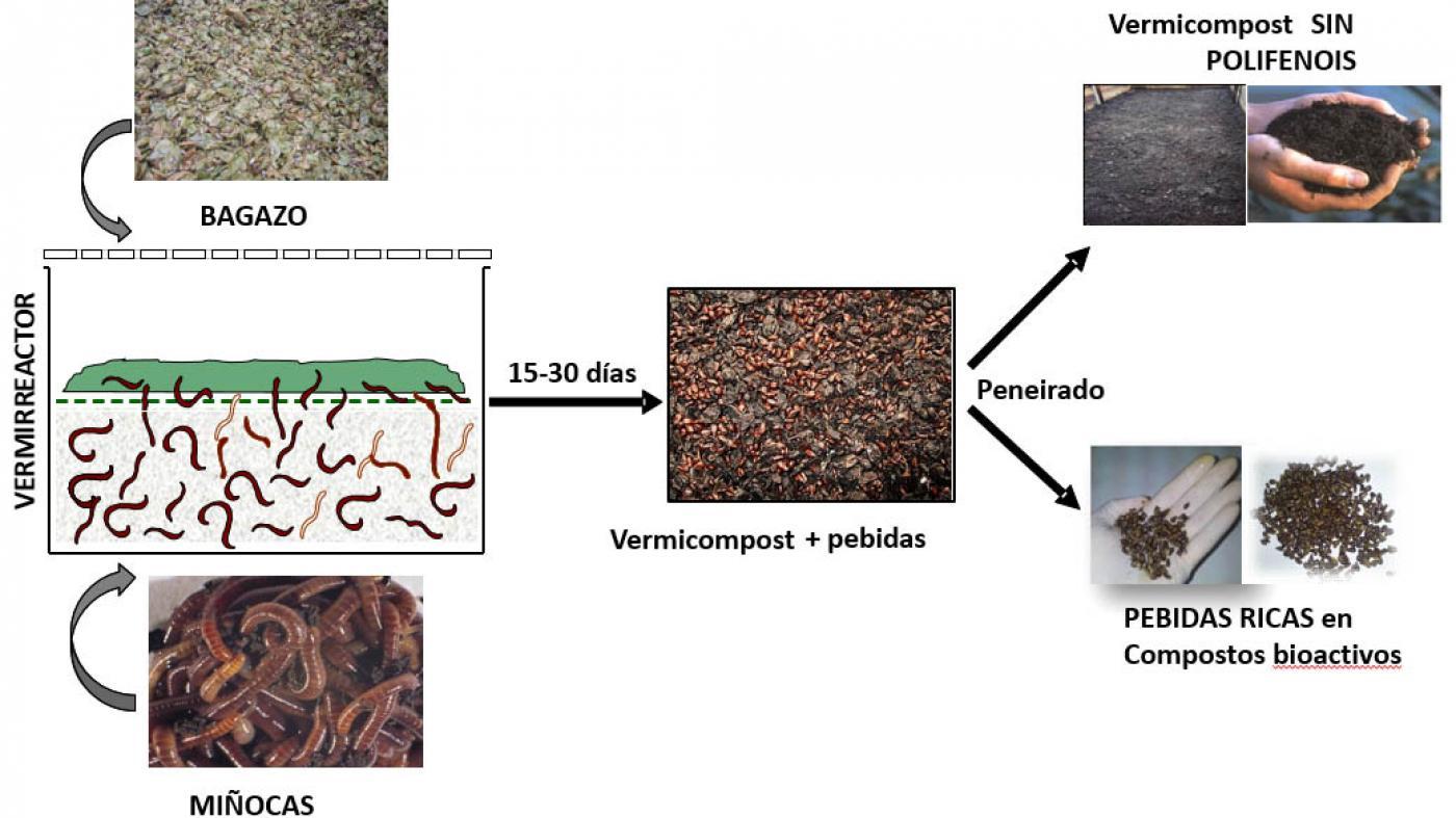 vitalver bagazo fertilizante 3