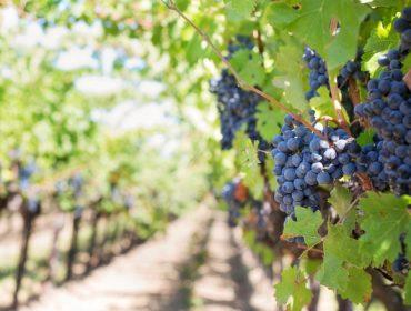 ¿Cales son os países que mellor se comportan para a venda de viño durante o coronavirus?