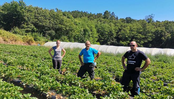 Río Ulla SAT, unha horta especializada na xudía e os amorodos de variedades diferenciadas