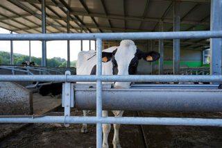 "Xornada de Delagro sobre ""Tratamento de augas  en vacún de leite"""