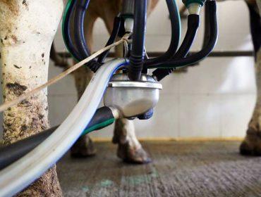 Así é a nova plataforma web de Conafe para o cálculo de índices de calidade do leite