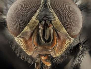 Se non se converten en moscas, non son un problema