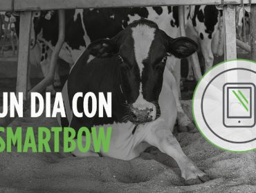 Smartbow®, o sistema de monitorización en vacún leiteiro  que facilita a vida do gandeiro
