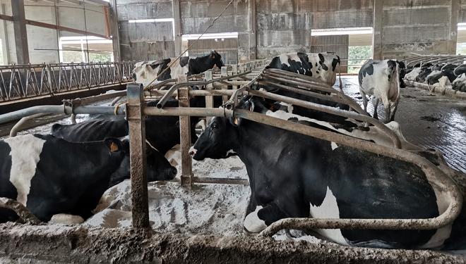 Están ampliando las instalaciones para duplicar la capacidad de la granja