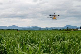 Xornada sobre uso de drons e de diferentes fertilizantes e rotacións para mellorar os rendementos do millo forraxeiro