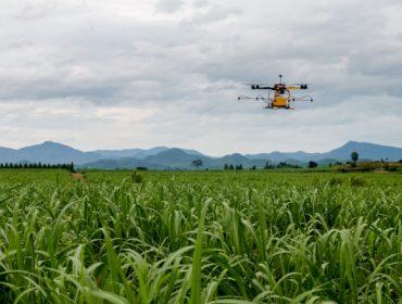Un servidor cartográfico web permitirá optimizar os cultivos de cereais
