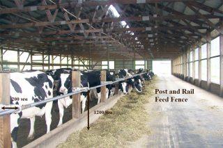 Recomendacións para a construción de establos para vacún de leite