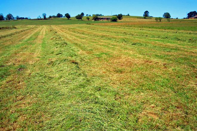 Cos excedentes de pasto das fincas fan silo de herba para complementar a alimentación