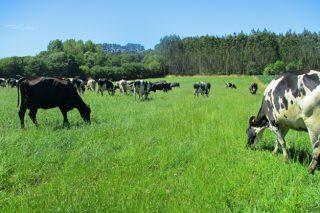 """A Xunta estudará os custos de producción das ganderías de leite e creará a marca """"Leite de Pastoreo de Galicia"""""""