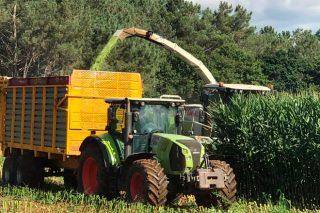 Adiantan o ensilado do millo en ganderías do Deza debido ós danos do xabaril