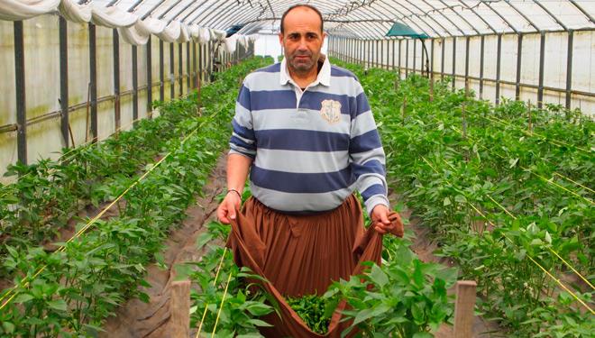 Pementos Carmucha, 3 generaciones apostando por los pimientos de Herbón de calidad