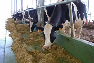 Webinar sobre manexo da vaca en transición