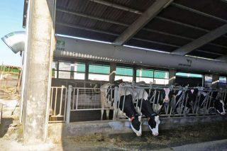 Webinar sobre a optimización dos sistemas para combater o estrés por calor en vacún de leite