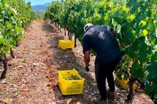 As vendas de viño baixaron un 5% polo coronavirus