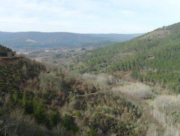 O monte veciñal de Laza inscribiuse no rexistro de absorción de dióxido de carbono