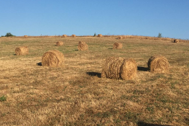 rolos herba seca 1