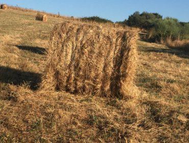 Véndense rolos de herba seca