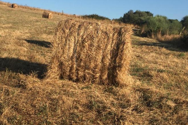 rolos herba seca 2