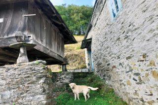 Estanse a revalorizar as casas no rural e as fincas rústicas a raíz do coronavirus?