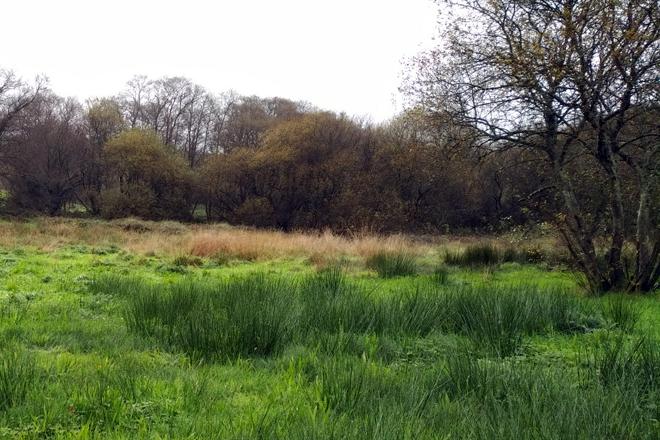 Zona húmida conservada nos terreos de Albagueira SC.