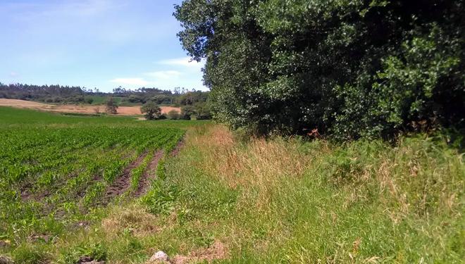 Zona de separación entre os cultivos e un cauce fluvial en Sat Santa Lucía.