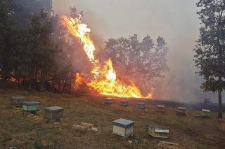 Máis de 200 colmeas calcinadas a consecuencia dos incendios en Ourense