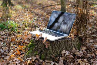 Webinar de FSC sobre xestión forestal e conservación da biodiversidade