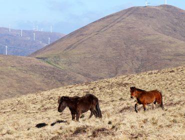 Como as 11 comunidades de montes do Xistral se implican na conservación ambiental