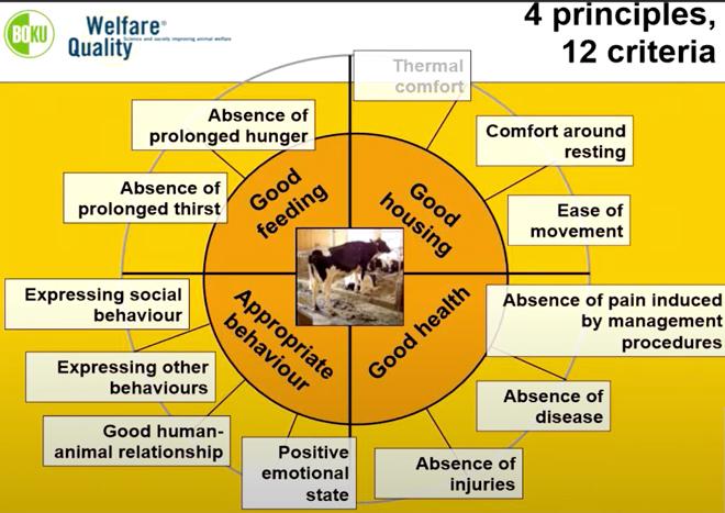 El proyecto Welfare Quality define hasta 30 indicadores sobre bienestar animal en la granja.