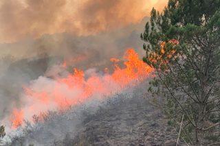 Como conservar o que se salvou dos lumes do Parque Natural do Xurés?