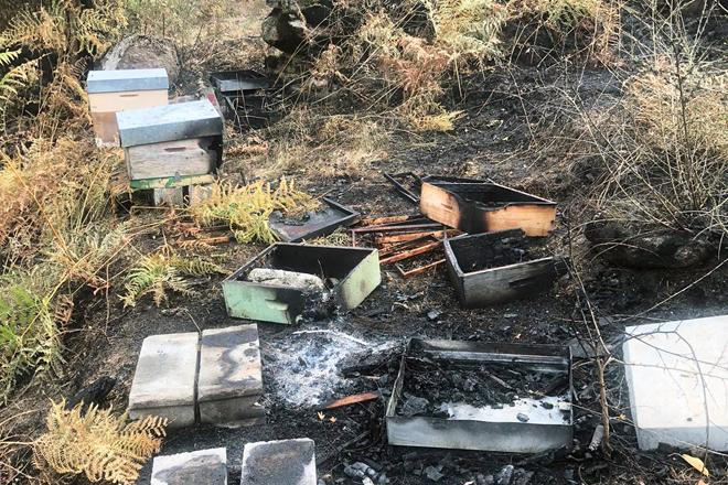 Colmeas tralo paso do lume esta semana na Serra do Xurés