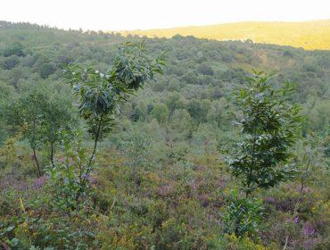 """""""Somos unha comunidade pequena, pero tentamos aproveitar ben a madeira que produce o noso monte"""""""