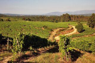 Terras Gauda impulsa un proxecto para a restauración da biodiversidade dos solos