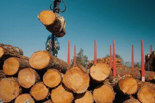 Ponse en marcha unha web que ofrece datos do sector forestal por concello