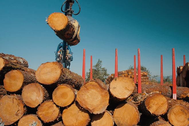 Que tipo de madeira de piñeiro demanda a industria galega?