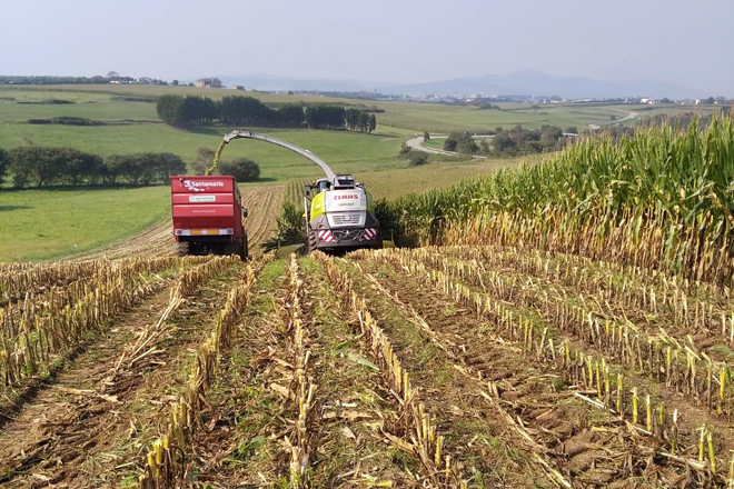 Valoración da colleita de millo 2020 nas principais comarcas leiteiras de Galicia