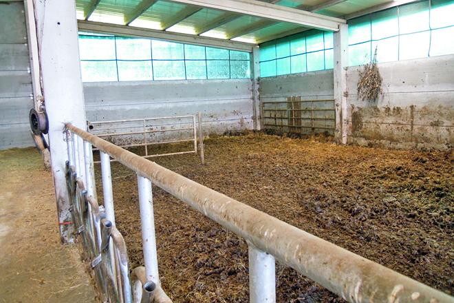 A nave nova te capacidade para 40 vacas en estabulación libre e cama de esterco