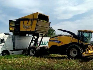 Vídeos do ensilado do millo en Galicia