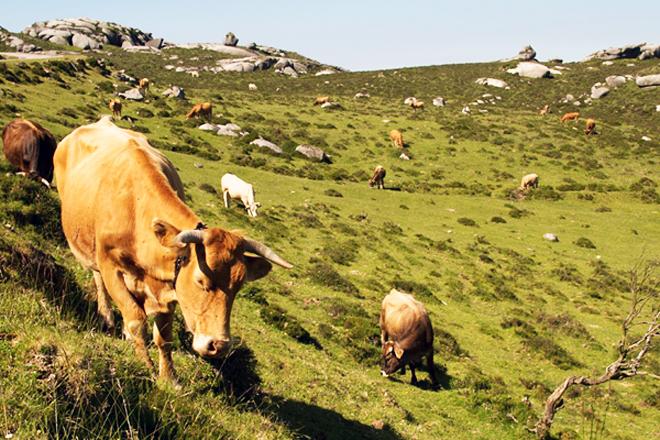 Executados 14 proxectos de pasteiros en montes veciñais e previstos 30 máis no 2021