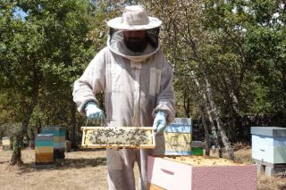 """""""Cando botei a vista ó campo, vin que a apicultura era do máis modular que había para emprender"""""""
