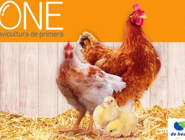 Chega ONE®, o novo plan nutricional de De Heus para avicultura industrial