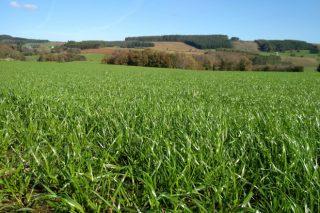 Xornada online de Delagro sobre cultivo de forraxes e pastos